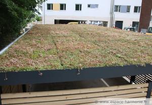 aires-plurielles-avec-toit-vegetal-3